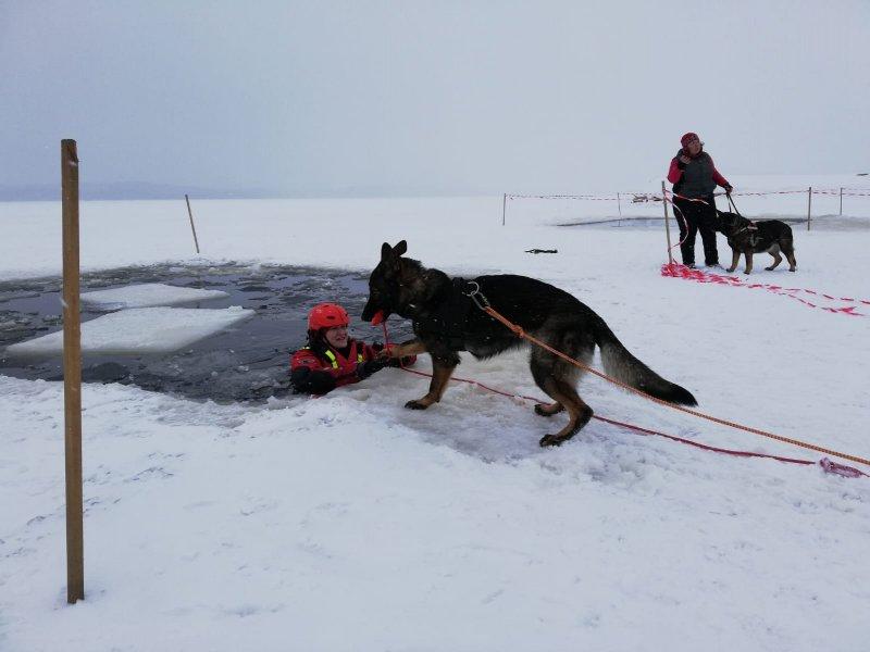Trénink na ledu