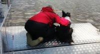 Vodní trénink s hasiči